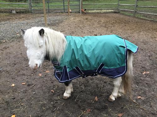 Gru looking smug in horse new blanket.