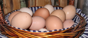 Hen and duck eggs